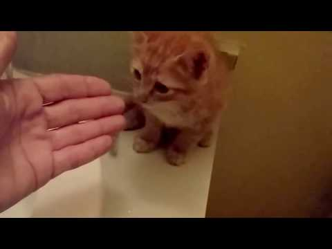 How to wash a Kitten without making it to scared
