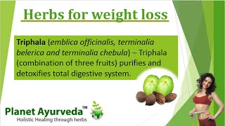 Weight Loss Herbs & Remedies, Obesity Herbs & Ayurvedic Treatment