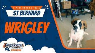 St Bernard (Wrigley)   Best Dog Trainers in Fredericksburg!   Dog Training Fredericksburg Va