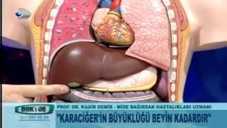 Karaciğerin önemi nedir?