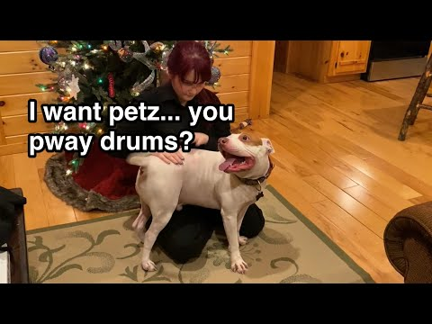 i-want-petz...-you-pway-beaubee-drums?