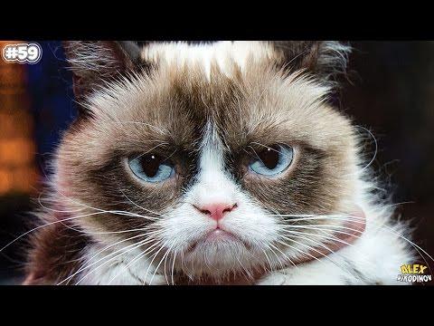 Известные коты-рекордсмены: представители книги Гиннеса