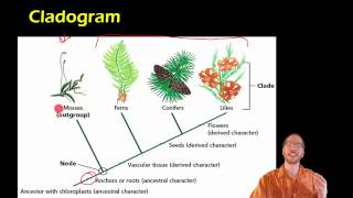 Bio 17.2.2 - Cladistics and Cladograms