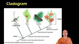 Bio 17.2.2 - Cladistics and Cladograms