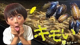 【閲覧注意】キモい展に行ってきた!大量のゴキブリ!カエル!ミルワーム!ゴキブリタワー thumbnail