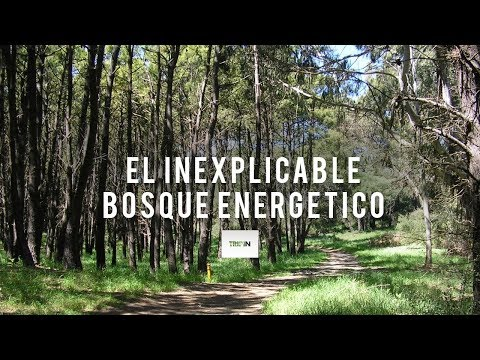 El inexplicable Bosque Energético de Miramar | Tripin Argentina