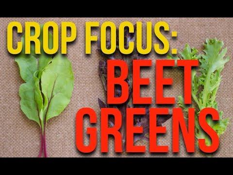 CROP FOCUS: Beet Greens