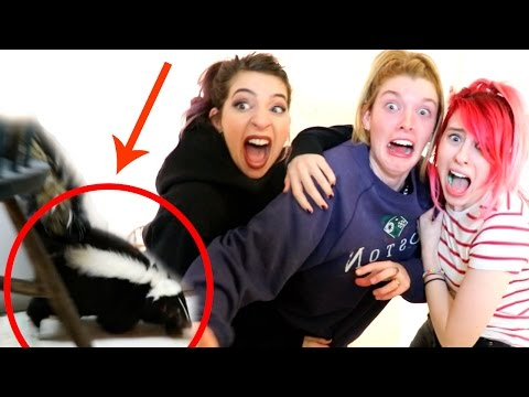 WE PUT A SKUNK IN HER HOUSE!!