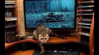 Подборка лучших приколов с котами, их фейлы|прикольные|смешные|топ|час|котики|забавные|длинное видео
