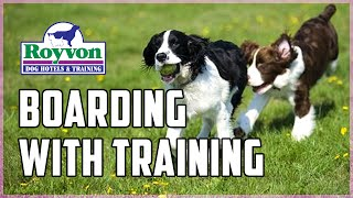 Dog Boarding With Training While You're On Holiday | Royvon