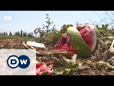 Greece - Agriculture at the brink of ruin | Made in Germany