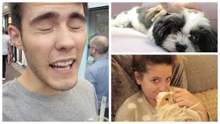 Cuddling Cute Puppies & Guinea Pigs!