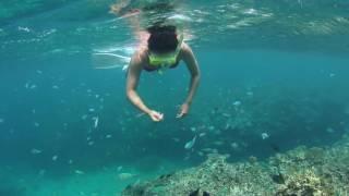 フサキビーチ沖 シュノーケルツアーのポイント。 色とりどりのサンゴと...