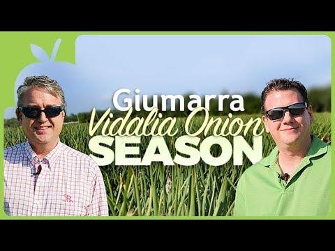 Giumarra Vidalio Onion Season 2018 / G&R Farms and Jewel Osco Retailer Farm Visit