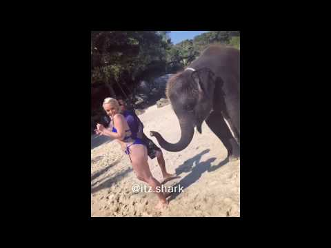 Charismatic Elephant Massages Girl's Glutes (Funny Voiceover)