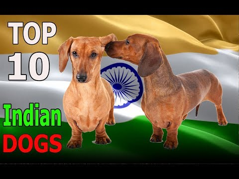 Top 10 Indian Dog Breeds | Top 10 animals