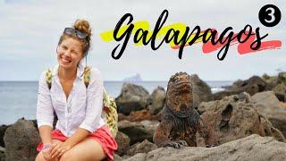 Raj na Ziemi nazywa się GALAPAGOS  3/3 GalapaGdzieBądź