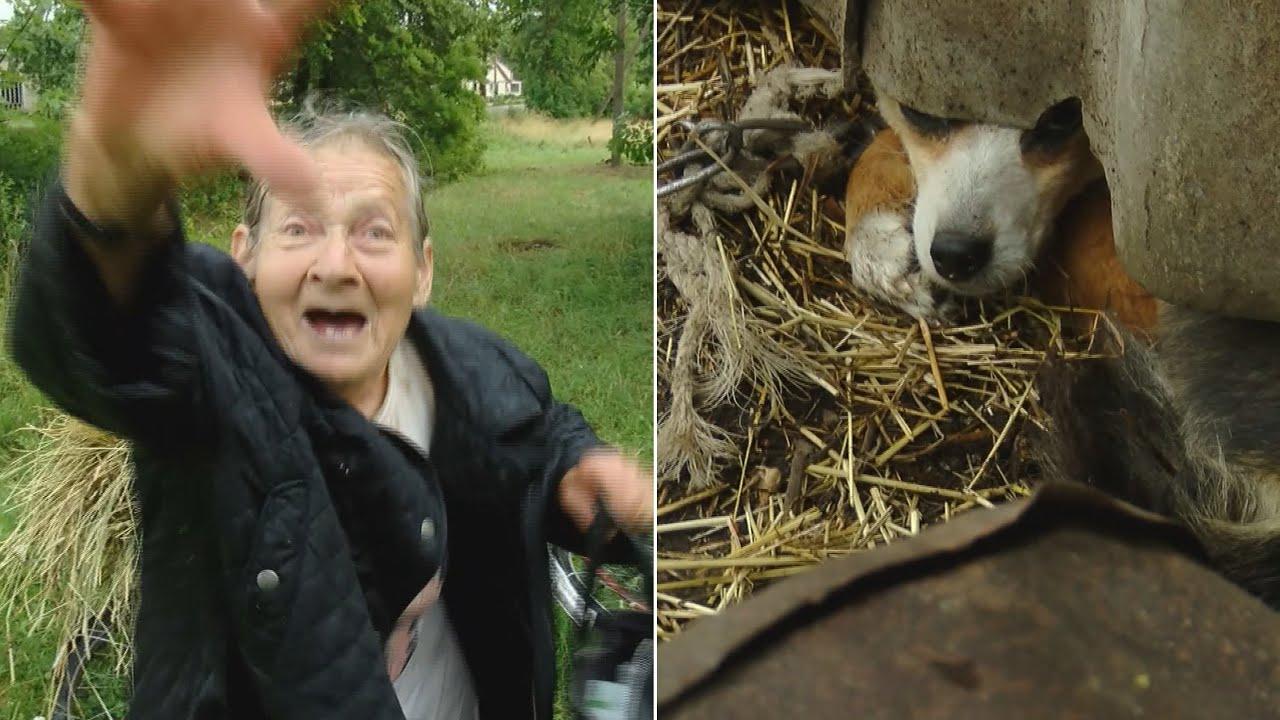 Pensininkės elgesys su gyvūnais kelia siaubą: atvykusių tarnybų laukė akibrokštas