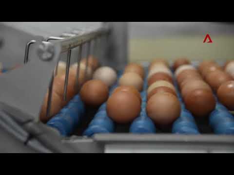 Egg farm in Singapore hatches new ideas to transform their business