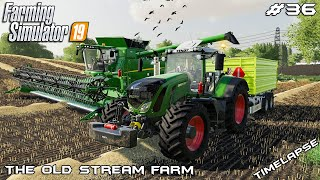 Harvesting wheat & oats | Animals on The Old Stream Farm | Farming Simulator 19 | Episode 36