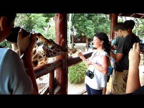 Giraffe Centre, Nairobi-Langata, Kenya