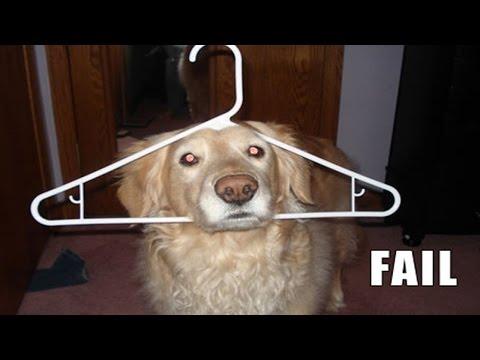 I cani non fanno i dispetti