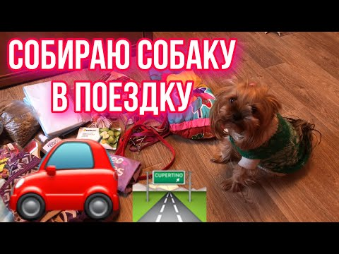 Собираю собаку в поездку | что нужно взять в поездку?