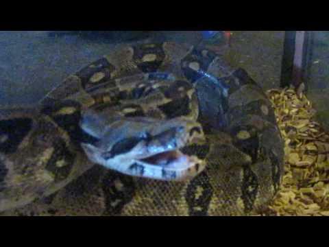 min sure slange