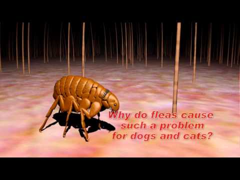 Understanding Flea and Tick Control