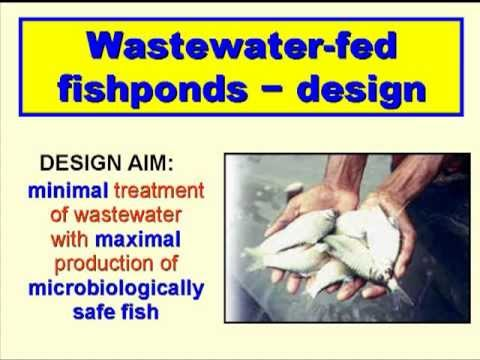 Wastewater Use In Aquaculure