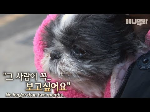 Terminally Ill Dog's Last Wish Is To... from YouTube · Duration:  4 minutes 13 seconds