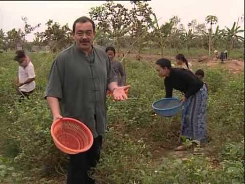 В поисках приключений - Камбоджа 2
