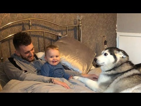 Waking up with a Baby and Huskies is the best thing EVER!