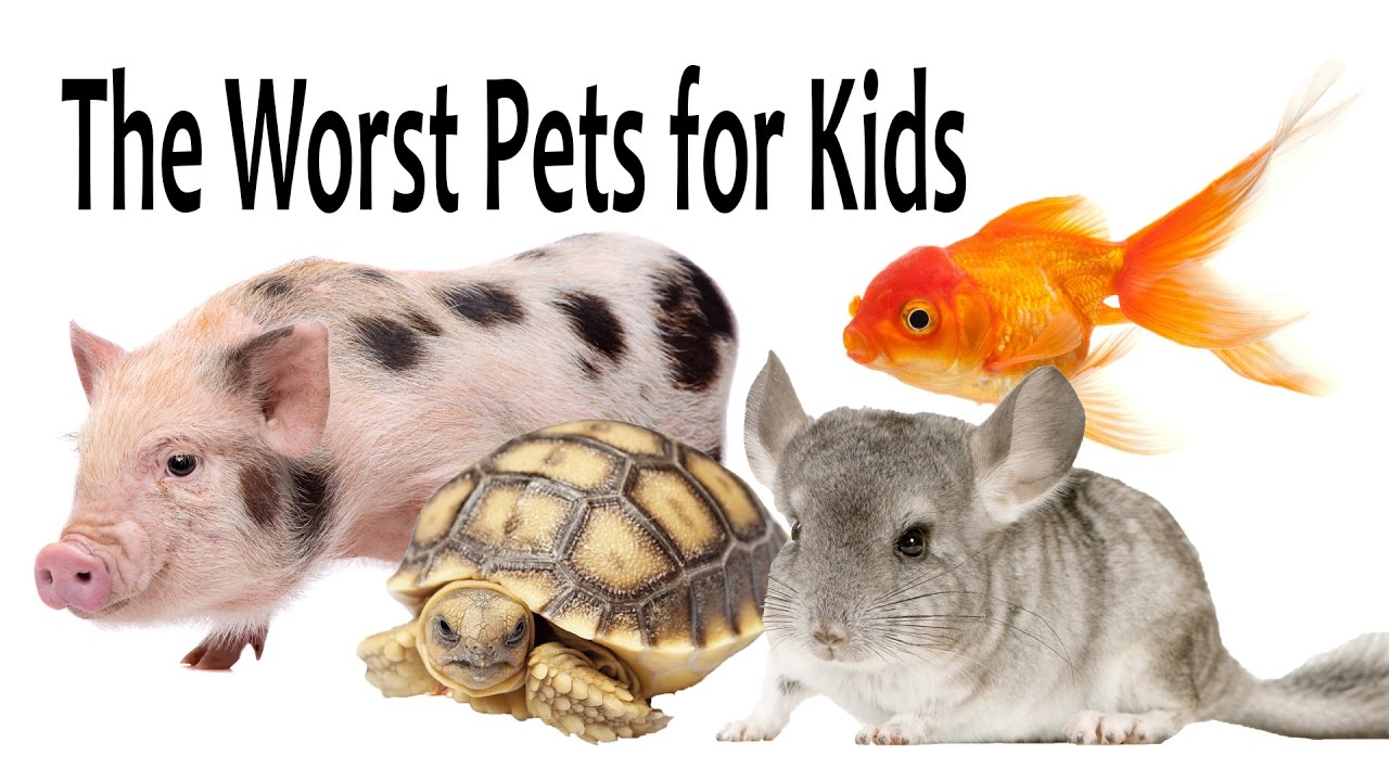 The Worst Pets for Kids
