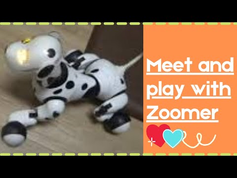 Meet and play with Zoomer: It's Monday playtime