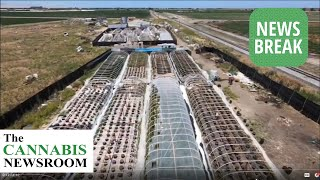 $80M Illicit MJ Grow-Op Discovered In Fresno Valley California