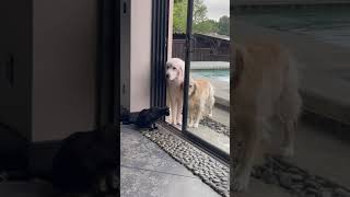 cat says dogs may not come inside