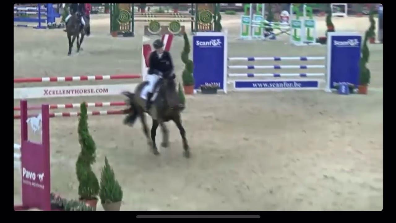 Oxford vd Middelstede - 5yo Stallion Competition Lier