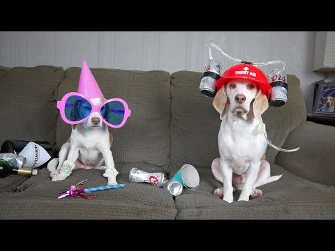 What Dogs Really do when Home Alone: Funny Dogs Maymo & Penny