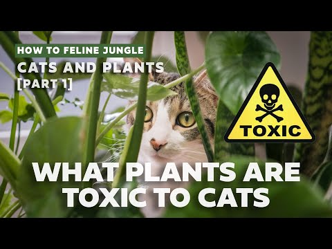 COMMON TOXIC & PET-FRIENDLY HOUSEPLANTS TO CATS
