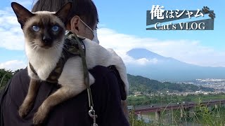 Siamese cats journey  Go to a hill where can see Mt. Fuji.