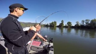spring chinook salmon fishing on the willamette river may 1 2016 who brought the banana