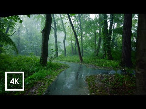 Relaxing Walk in the Rain, Umbrella and Nature Sounds for Sleep and Relaxation | 4k ASMR