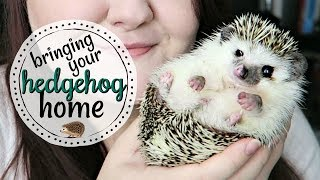 What to Expect When Bringing a Hedgehog Home