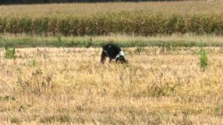 Tikka in the field