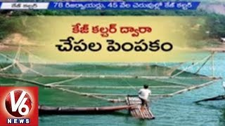 TRS government to Implement Cage Culture Fish Farming in Telangana | V6 News (17-06-2015)