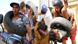 مجرم خطير مول لبنو والحرب مع العصابات..(الكلب الوفي)