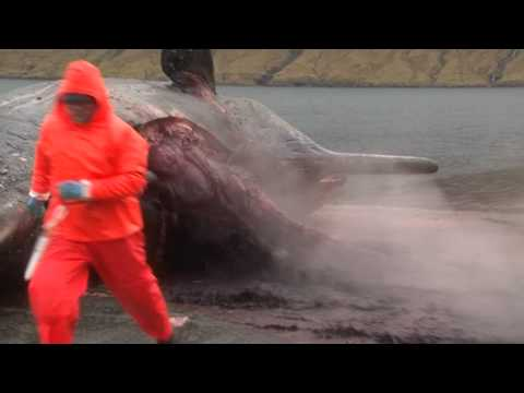 This Sperm Whale Exploding Is Incredible And Horrifying