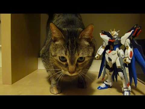 PG Strike Freedom (Part 7: Verdict) Gundam Seed Destiny gunpla review