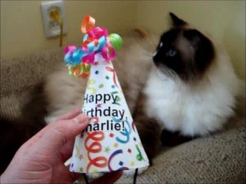Cat Birthday Hat DIY - How to Make a Cat Birthday Hat for a Cat